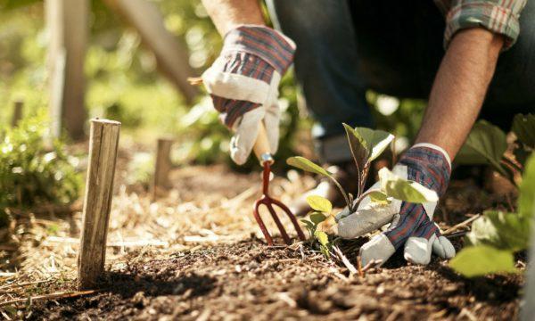 Coltivare i propri prodotti orto in casa