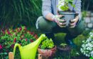 Giardino? Abbelliscilo con gazebi, fontane e piante decorative