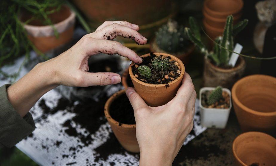 Proteggere le piante dal gelo e dall'inverno